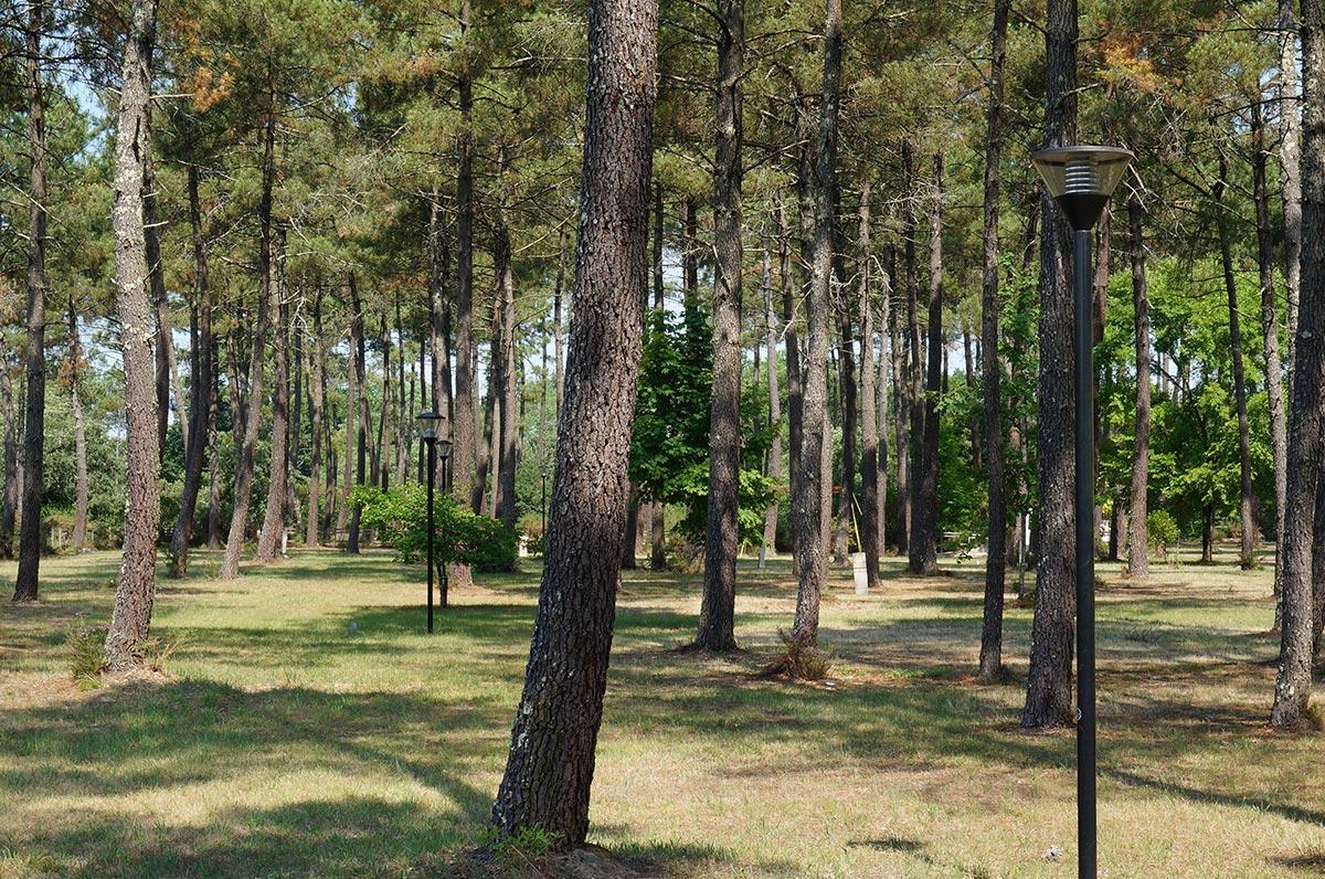 Camping municipal de l'Arriu